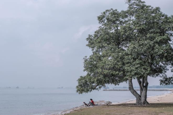 Tree by sea at East Coast Park (Photo by Rayson Tan on Unsplash)